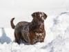 dog-walk-dec-18th-2012-050