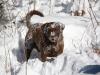 dog-walk-dec-18th-2012-143
