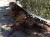 sues-pups