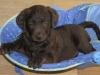 puppyspring2